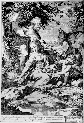 Cort C; La Madonna delle ciliegie - 350