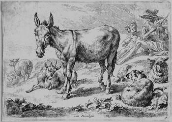 Berchem N; Vari animali - 350